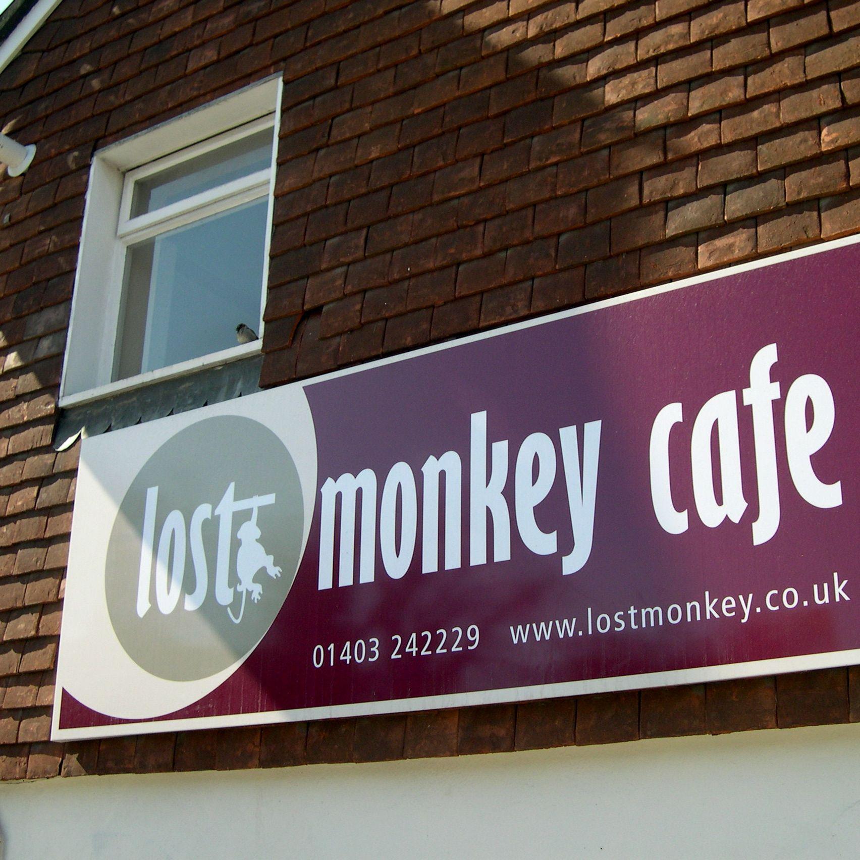 lost-monkey1